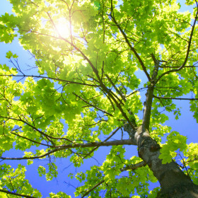 Alto albero verde